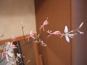 2006_0926akibara0181