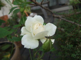 2006_0929niwa0190