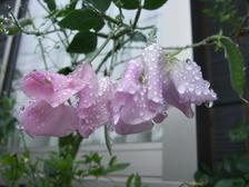 Raindrop2
