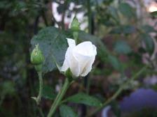 2009_0910numa0024