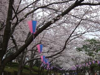 2010_0404sakura0004