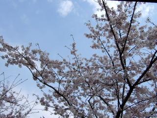 2010_0505tenpura0014