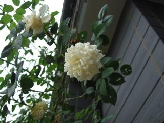2010_0814mei0019
