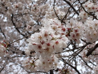 2011_0410mei0008