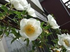 2011_0503mei0021