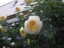 2012_0520mei0025